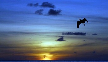 Maldivene satser på det skandinaviske markedet