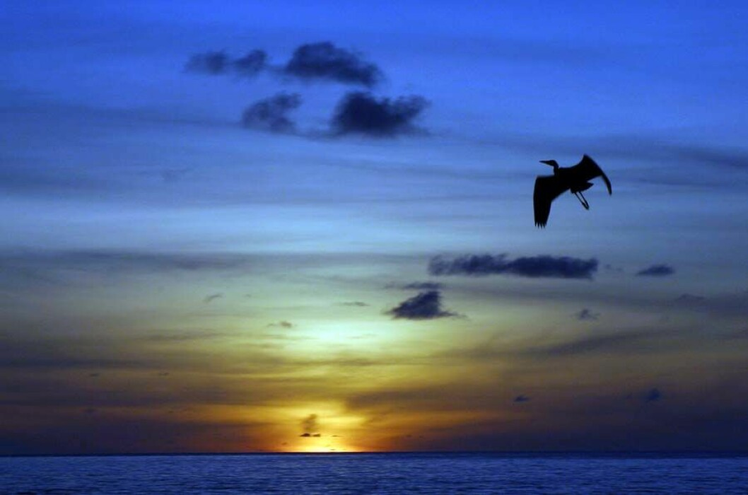 Soloppgang Maldivene