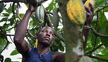 Fairtrade-merket sjokoladedrikk