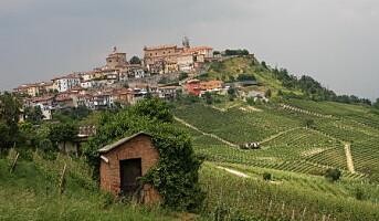Ny importør byr på italienske viner