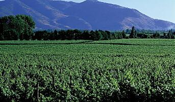 Viser miljøbevissthet med vin