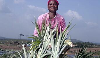 Søte og rettferdige ananas til Norge