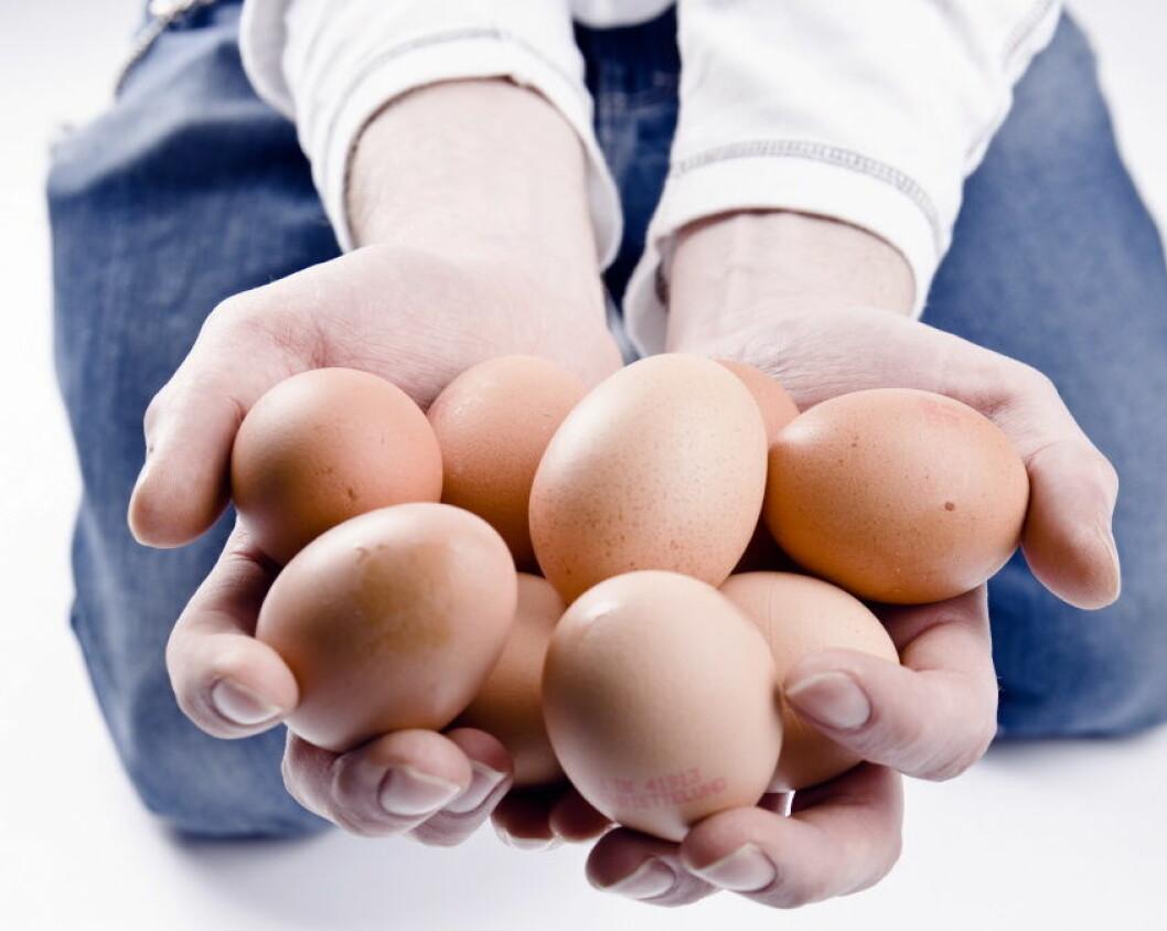 Egg illustrasjon colourbox1