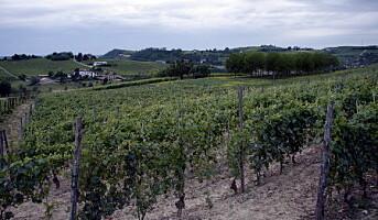 Flavours med sin egen vin fra Piemonte