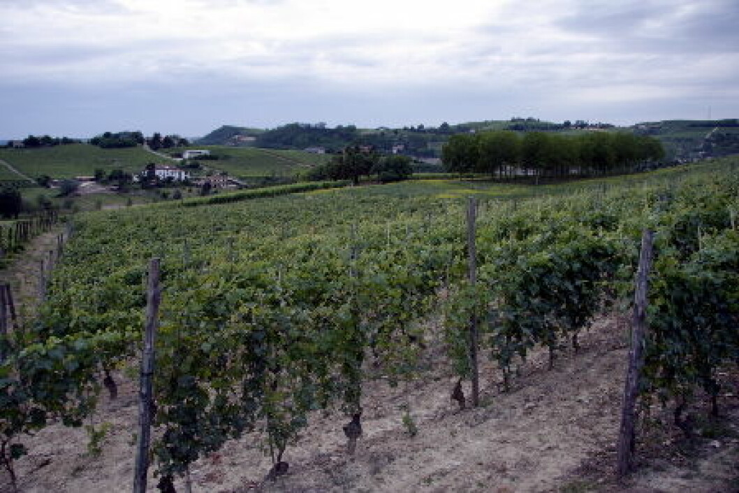 Vinmarker Barbera Piemonte