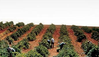 Første spanske vingård til å sertifisere sine karbonutslipp