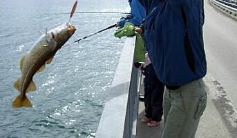 Nå kommer fisketuristene