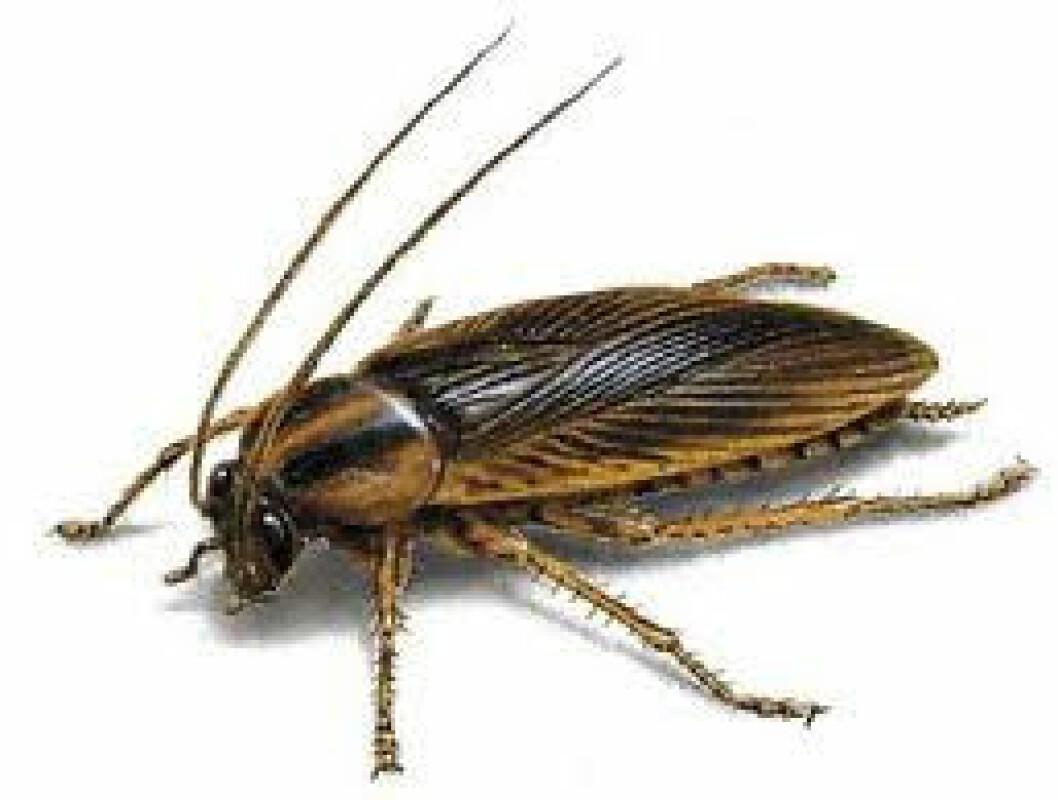 kakerlakk2