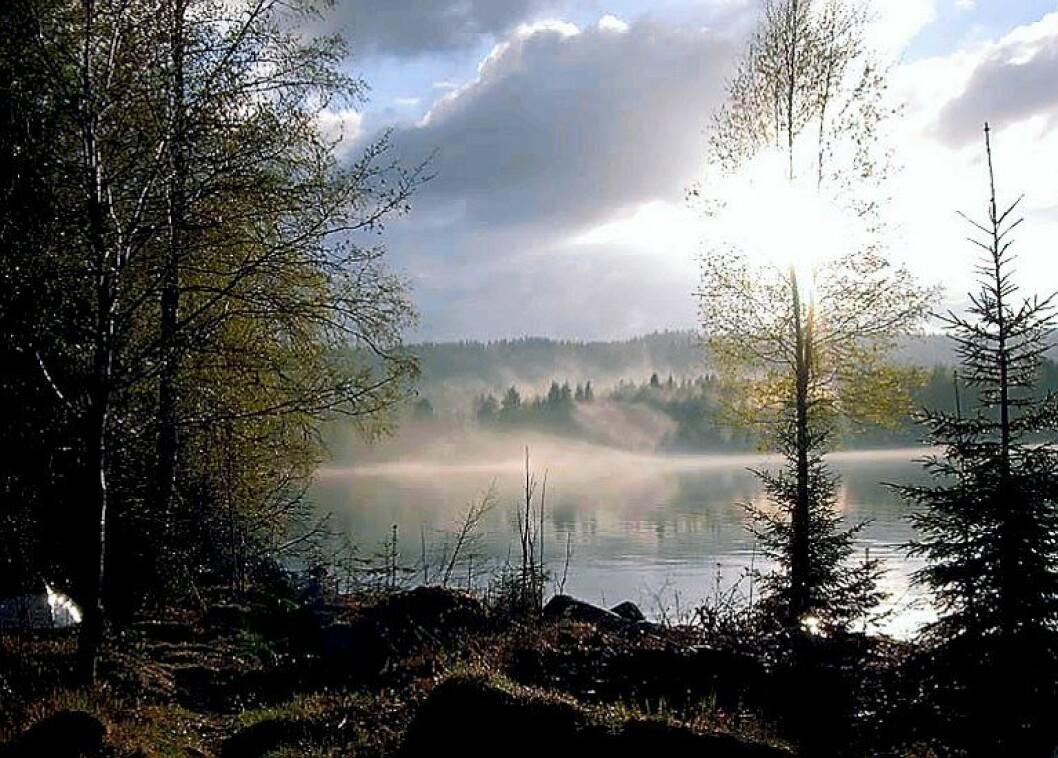 SkasenFinnskogen