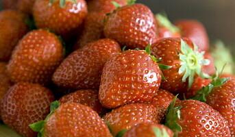 Bli inspirert av sommerens frukter og bær