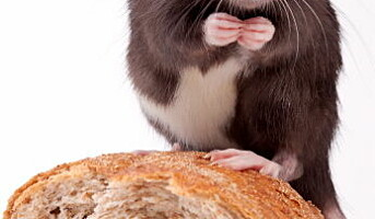 Faket rottebilde endte med fengsel