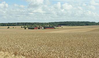 Økologisk fagdag om korn og dyrkingsmetoder