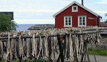Matfestivaler i Lofoten denne høsten