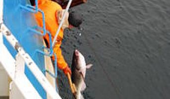 Norsk miljømerking av villfisk