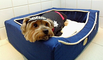 Hotellopphold for hundene