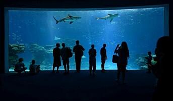 Åpnet det største haibassenget i Midtøsten