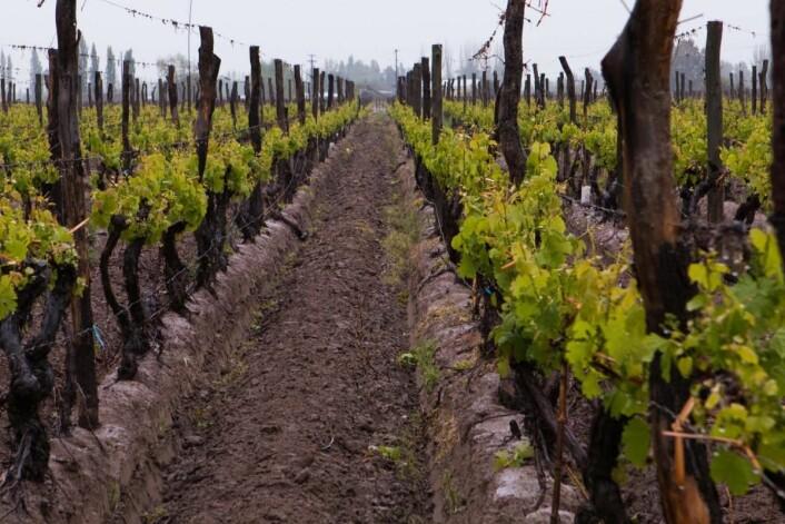 Vinmarker i Argentina. (Foto: Liora Levi)