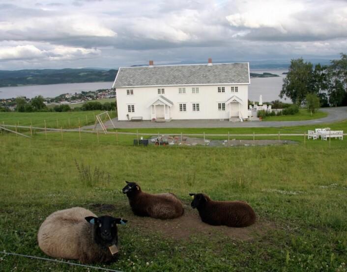 """Fra """"Den gylne omvei"""" i Nord-Trøndelag. Her fra Husfrua. (Foto: Morten Holt)"""