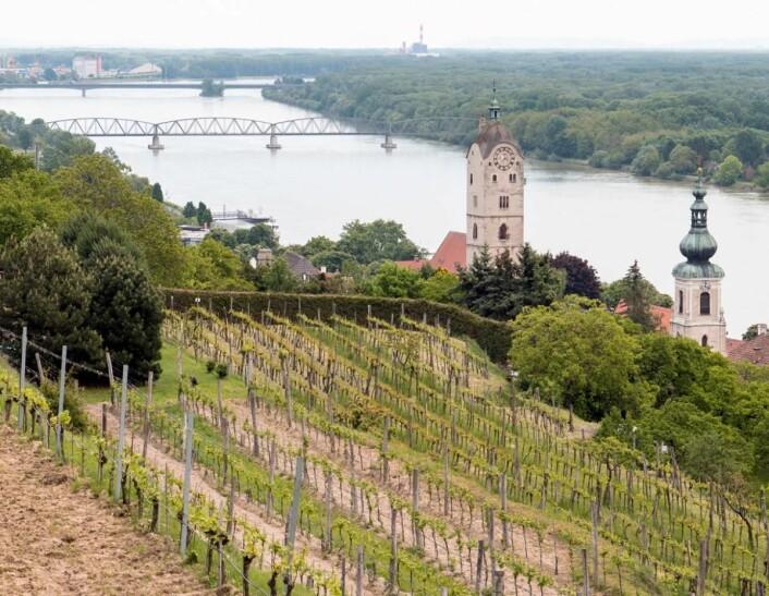 Weingut Stadt Krems disponerer rundt30 hektar vinmark i Kremstal. (Foto: Eirik Sand Johnsen)