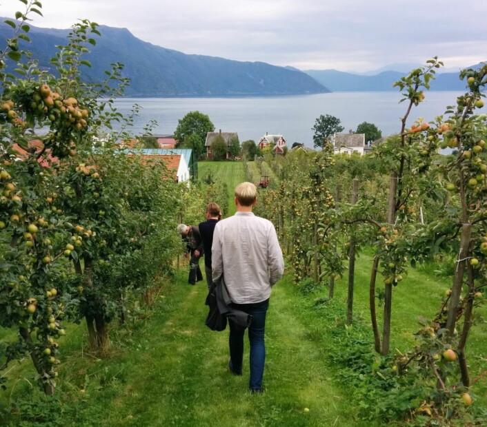 Eplene som brukes i Lovløs Cider kommer fra Balestrand i Sogn og Fjordane. (Foto: Privat)