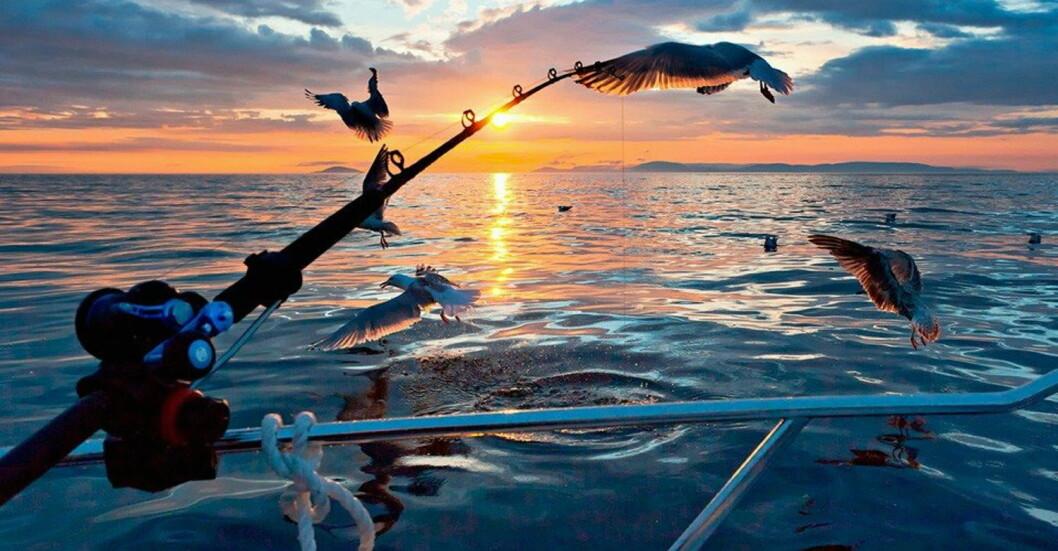 Illustrasjonsfoto: Kongshus Jakt- og Fiskecamp
