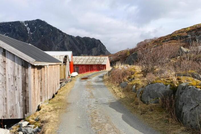 Det er ikke ny asfalt og gode forbikjøringsmuligheter som er poenget med veikartet. (Foto: Børre Skiaker, KNA)