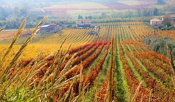 Ny økologisk produsent på Vinmonopolet