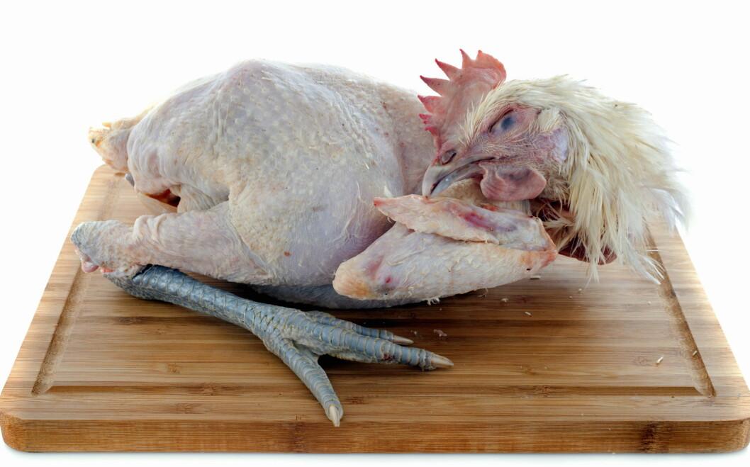 Bresse-kylling på Bocuse d'Or-menyen. (Illustrasjonsfoto: Colourbox.com)