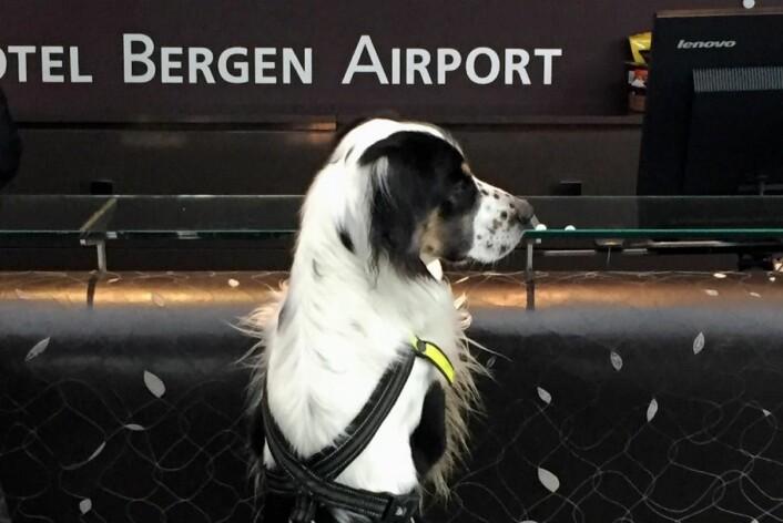 Blir hundehotell i et døgn. (Foto: Clarion Hotel Bergen Airport)