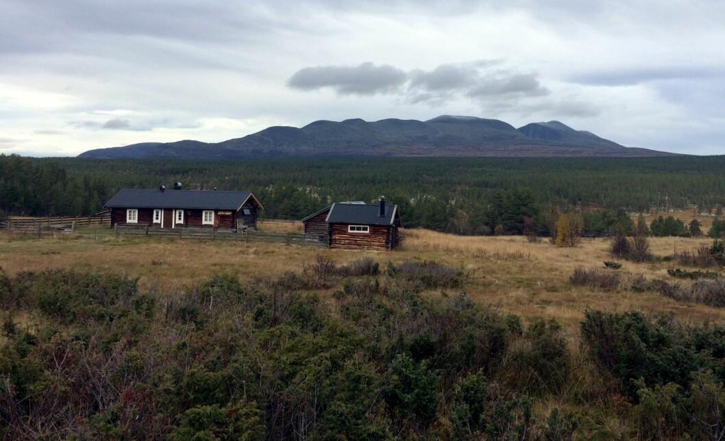 Fjellet er mer populært enn på lenge. Her fra Rendalen. (Foto: Morten Holt)