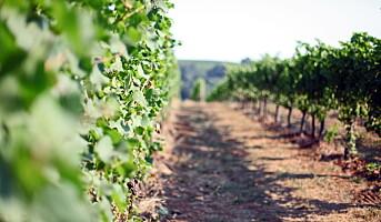 Kåret til «Årets vinregion»
