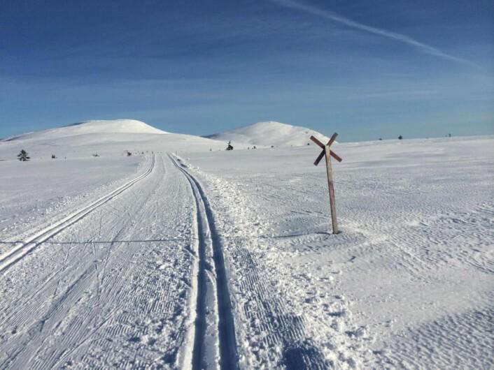 Milevis av langrennsløyper på og rundt Trysilfjellet. Foto: Morten Holt)