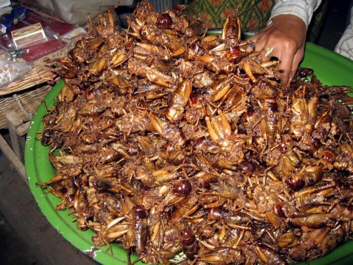 Innsekter spises i dag av om lag to milliarder mennesker på kloden. Her friterte sirisser på et marked i Kambodsja.
