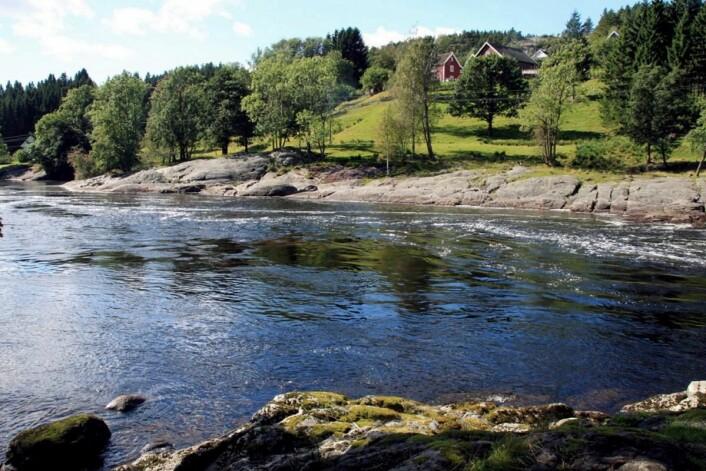 Lakseelva Topdalselva renner forbi eiendommen. (Foto: Boen gård)