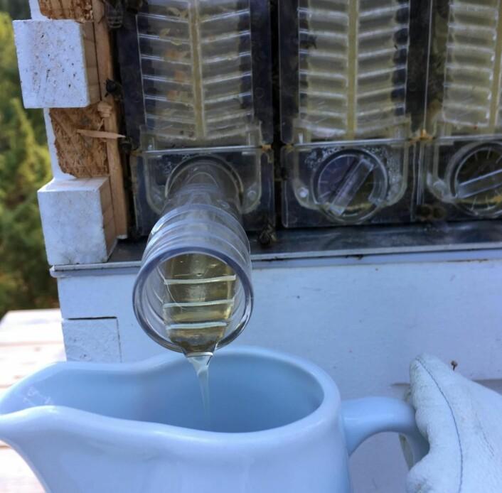 På Kleivstua produseres det honning fra australske Honey Flow-kuber. (Foto: Kleivstua)