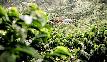 Lanserer sin første Fairtrade-kaffe