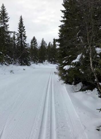 Flere steder i landet byr på topp langrennsforhold allerede nå. Dette bildet ble tatt i går, torsdag 26. oktober, på Budor mellom Elverum og Hamar i Hedmark. (Foto: Morten Holt)