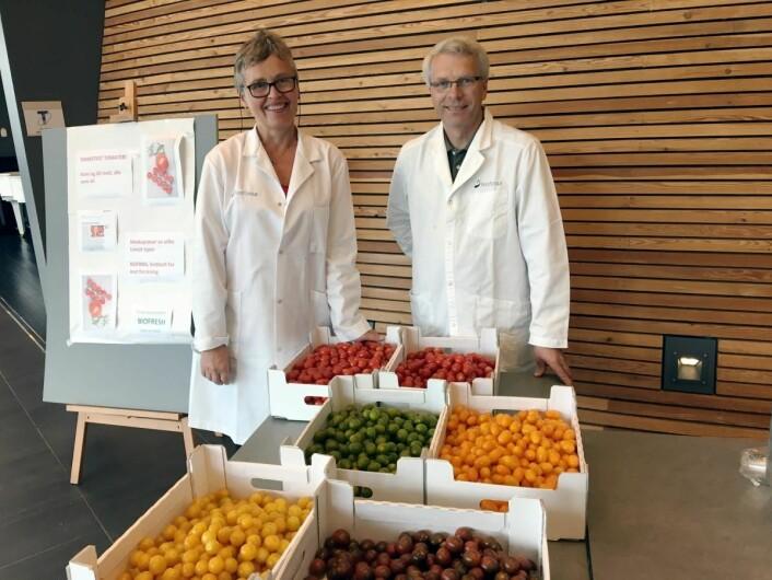 Test med fargede cherrytomater, utført av Jorunn Sofie Hansen, Nofima og Geir Håbesland, Brandgarden. (Foto: Nofima)