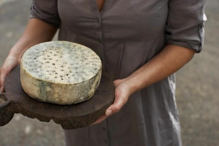 Kraftkar fra Tingvollost er den eneste norske osten som har vunnet World Cheese Awards. (Foto: Alexander Hagstadius)