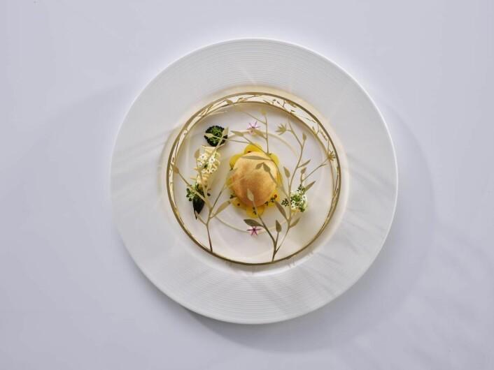 Fra det Christian A. Pettersen serverer i dag: Golden egg and castelmagno cheese – gullegg og castelmagno-ost. (Foto: Tom Haga)