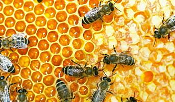 Klart for NM i honning