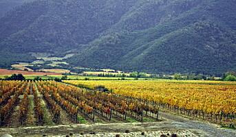 Miljøsmart rødvin fra Chile