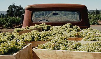 Feirer 50 år med bærekraftig vinproduksjon