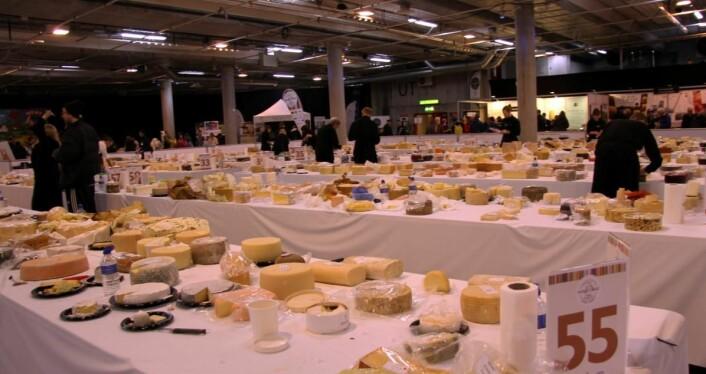 3472 oster ble bedømt i dagens oste-VM. Den aller beste var norsk! (Foto: Morten Holt)