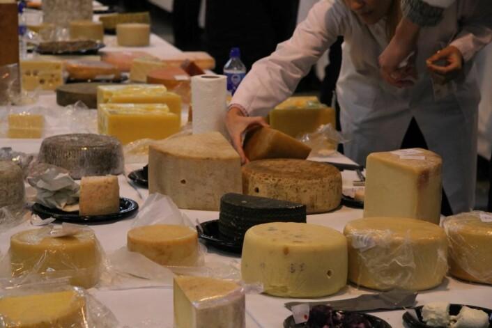 3472 oster skal i dag bedømmes i Grieghallen i Bergen. (Foto: Morten Holt)