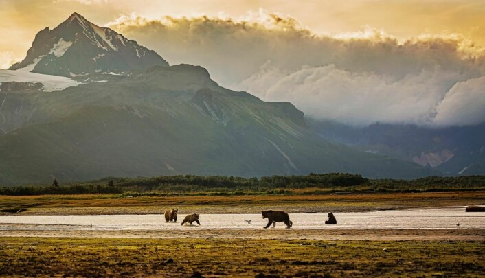 Alaska. (Foto: Getty Images/Hurtigruten)