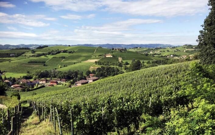 Ikke noe å si på utsikten utover det typiske Piemonte-landskapet fra Villa Bella Piemonte. (Foto: Morten Holt)