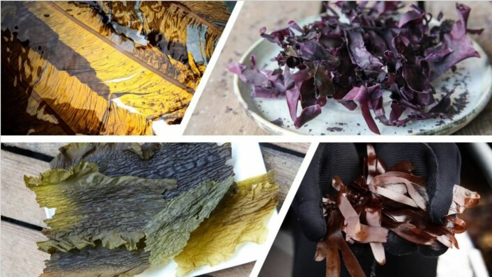 Marine planter på Årets kokk-menyen. (Foto: Lofoten Seaweed)