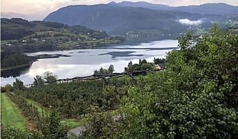 Skal kåre Norges beste epledrikker