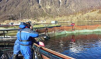 Tredoblet fiskeproduksjonen med oksygeneringsløsning